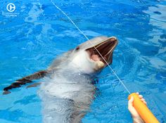 Ready, aim, splash! Come stop by Clearwater Marine Aquarium and spend your day with Hope.