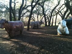 """The granite cows...A big hit for the kids in the summer and """"The"""" place for photos at prom time."""