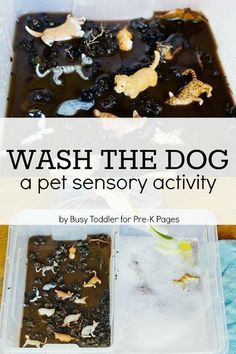 Pet Sensory Activity: Wash the Dog. A fun, hands-on learning activity for your preschool kids! Learn about caring for pets during a pet theme at home or in the classroom. - Pre-K Pages # Pets activities Pet Sensory Activity: Wash the Dog Sensory Tubs, Sensory Activities Preschool, Pet Theme Preschool, Sensory Boxes, Preschool Printables, Toddler Sensory Bins, Kids Activities At Home, Preschool At Home, Day Care Activities