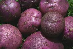 ARRAN VICTORY Variety Of Fruits, Arran, Fruits And Vegetables, Victorious, Avocado, Potatoes, Fruits And Veggies, Lawyer, Potato