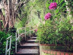 """Find one of the many sets of """"secret stairs"""" hidden all over Los Angeles that were originally used to allow pedestrian walkability around the hilliest areas of LA like Echo Park, Silver Lake and even some areas of Santa Monica (pictured here)."""