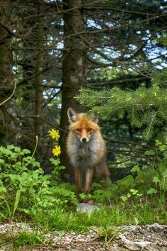 WILD AND FREE !!!! Photo by PMK K. — National Geographic Your Shot
