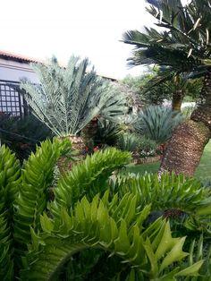 Cycad gardens