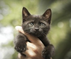 baby male cat - http://www.1pic4u.com/blog/2014/09/16/baby-male-cat/