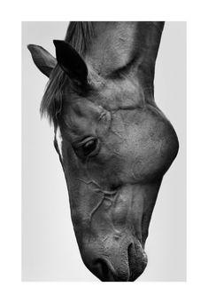 The Horse - Sarah McColgan - The Cool Hunter - The Cool Hunter