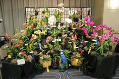 A display of orchids