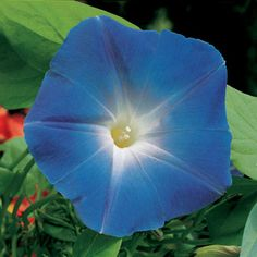The Easter Bunny brought Jessamine some Heavenly Blue morning glory seeds. We'll plant them in the two back beds that touch the garden arch and twine them through as they grow up and over to cover the arch.