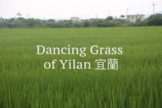 Taiwan travel video - Dancing Grass of Yilan 宜蘭 Free Footage, Taiwan Travel, Travel Videos, Taipei, Day Trip, How To Introduce Yourself, Adventure Travel, Grass, Dancing