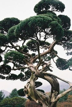 reminds me of Dr. Seuss trees,
