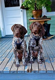 16 Reasons Pointers Are Not The Friendly Dogs Everyone Says They Are #germanshorthairedpointer