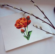 Watercolor flower by Sasha Unisex from Russia.