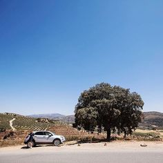 Just a little pit stop to admire a million olive trees by (Ps not exactly sure where we took this photo - it was on our way to Seville - if you know drop a comment below) Olive Tree, Seville, Ps, Trees, Drop, Adventure, Instagram, Sevilla, Adventure Game