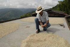 Cafeteros exportan un millón de sacos de cafés| El Espectador