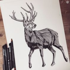 STAGGY Stag Ink Drawing. Definitely weather inspired!  THEBEARHUG.com / DUKELIXON.co.uk