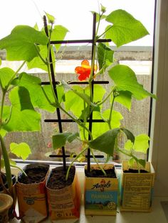 If you are blessed with a backyard or a terrace you might not want to grow plants indoors but for the rest of us, indoor gardening might be the only way out. You can grow practically any type of plants indoor if you can arrange the right kind of container, light, moisture etc for that particular plant. That said, some plants work especially well in indoor environments. #houseplants #Indoorgardening