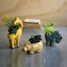 Hippo, elephant, or giraffe? How about all three!? With these insanely cute ceramic planters, you can add life to any space in your home. Great for a child's room, den, or kitchen windowsill, these lit...  Find the Wild Planters - Set of 3, as seen in the Black Friday Sale: Décor & Accents Collection at http://dotandbo.com/collections/black-friday-sale-decor-and-accents?utm_source=pinterest&utm_medium=organic&db_sku=KLL0179
