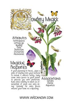 Plant Magic, Magic Herbs, Herbal Magic, Wiccan, Magick, Herbal Witch, Lucky Plant, Green Witchcraft, Medicinal Plants
