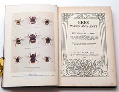 $19.56 Bees Wasps and Ants by Rev Charles A Hall by CollectableMrJones