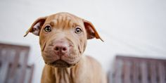 These States Have Taken A Stand Against Breed-Specific Legislation