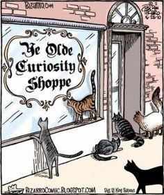 Curiosity (Hee, hee, hee!)