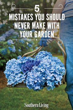 Smooth Hydrangea, Hydrangea Care, Hydrangeas, Hydrangea Varieties, Garden Yard Ideas, Backyard Ideas, Grandmas Garden, Shade Garden Plants, Healing Herbs