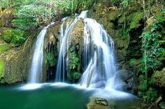 This is a picture of an South African rainforest too prove Africa isn't just desert.