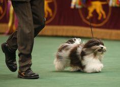 Cuteness alert! 50 favorite dog breeds