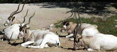 25 самых редких животных на земле