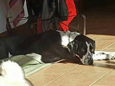Lounging in the morning sunshine.  #puppieslovethesun #puppiesofinstagram