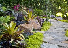 images about Bromeliad gardens on Pinterest