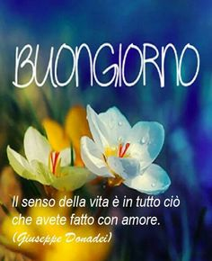 ShareThis Italian Memes, Italian Phrases, Photo D Art, Flowers For You, Inspirational Thoughts, Say Hello, Good Morning, Photos, Words