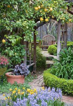 Garden Types, Garden Paths, Diy Garden, Garden Beds, Lush Garden, Balcony Garden, Bamboo Garden, Fruit Garden, Herb Garden