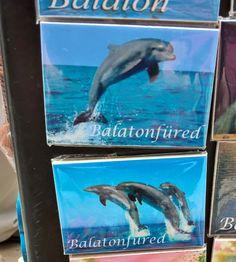 """zamatos-zamat: """" Örökül a sikeres füredi delfintelepítés emlékére """" valamikor 17…"""