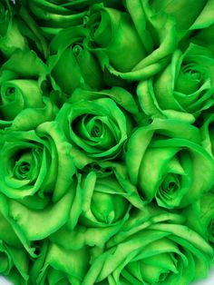 All about preserved roses information, tips and guides. Flowery Wallpaper, Flower Phone Wallpaper, Green Wallpaper, Beautiful Rose Flowers, Flowers Nature, Exotic Flowers, Dark Green Aesthetic, Aesthetic Colors, Green Rose