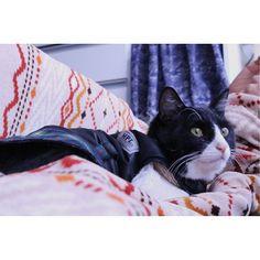 ❁* location : my house . #愛猫#ハチワレ#こたつ布団でぬくぬく#オフショット#ファインダー越しの私の世界#写真好きな人と繋がりたい#写真撮ってる人と繋がりたい#カメラ好きな人と繋がりたい#カメラ女子#カメラ友達募集中#カメラでキリトル世界#canon#photo#camera#japan