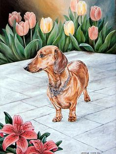 Two of my favorite things...doxies  tulips.