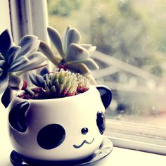 Panda Pot!