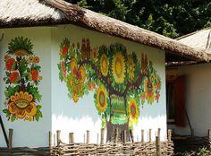 Історія про Золоту квітку. Соняшники полів Українського Півдня (фото) Черкащина