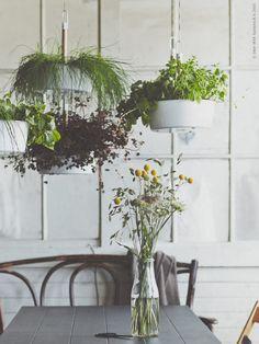 Vi hänger i köket och låter amplarna BITTERGURKA bilda en vertikal miniatyr-trädgård  ovanför bordet. Plantera färska örter och kryddor direkt i krukan och låt middagsgästerna plocka sin egen favorit till måltiden. Det blir inte mer närodlat än så!