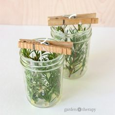 Evergreen Pressed Herb Candles Make your own pressed herb candles using herbs … - Candle Making Evergreen Herbs, Candle Craft, Candle Jars, Diy Candle Ideas, Bougie Candle, Homemade Candles, Make Candles, Diy Candles Easy, Gel Candles