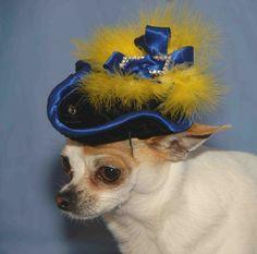 Fancy. #dog #hat for Oliver Gilbert @Andy Yang hauser