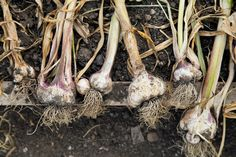 Time to plant. Prepare to get your hands dirty. Fall Winter, Autumn, Heaven, Plant, Hands, Magazine, Garden, Sky, Garten