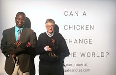 https://www.pinterest.com/avenidaazul/ Can a chicken change the world