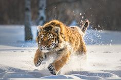 Kitty & Snow by janstria #animals #animal #pet #pets #animales #animallovers #photooftheday #amazing #picoftheday