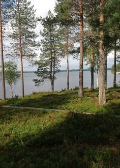Near Rovaniemi, Finland