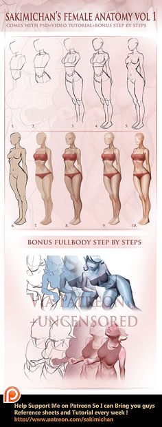 Female anatomy step by step tutorial (term 4 reward) Bonus psd file and video tutorial for my pateron supporters :3 http://www.patreon.com/creation?hid=1414078&rf=371321 All Patreon reward Archive...