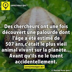 Oh les cons ! Weird Facts, Fun Facts, Good To Know, Did You Know, Ah Ok, Science Facts, French Quotes, Live Your Life, Entrepreneur Quotes