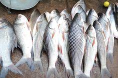 Urine smells fishy . Signs of a health problem . - LORECENTRAL