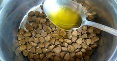 3 trucos con aceite de oliva para perros