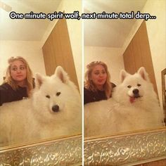 Oh my GOODNES!! I want that dog!!!!
